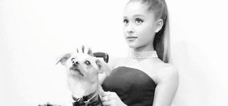 Ariana Grande – Into You 歌詞を和訳してみた