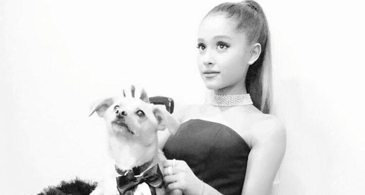 犬と一緒にアリアナグランデ